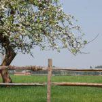 de appelboom van Eyndevelde logeren in de Vlaamse Ardennen